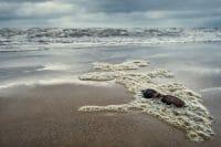 Beachcombing /  [DSF6557 as Smart Object 1.jpg nggid03317 ngg0dyn 200x0 00f0w010c010r110f110r010t010]