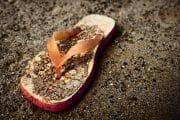 Beachcombing /  [a flop.jpg nggid03300 ngg0dyn 180x0 00f0w010c010r110f110r010t010]