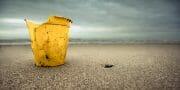 Beachcombing /  [dear liza 3.jpg nggid03301 ngg0dyn 180x0 00f0w010c010r110f110r010t010]
