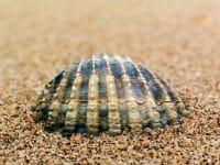 Beachcombing /  [embedded.jpg nggid03288 ngg0dyn 200x0 00f0w010c010r110f110r010t010]