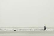 The Fylde Coast /  [a dogs life.jpg nggid041016 ngg0dyn 180x0 00f0w010c010r110f110r010t010]