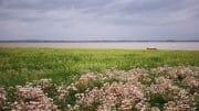 The Fylde Coast /  [a safe harbour.jpg nggid041011 ngg0dyn 180x0 00f0w010c010r110f110r010t010]