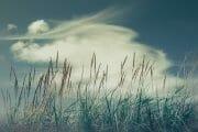 The Fylde Coast /  [back soon 4.jpg nggid041007 ngg0dyn 180x0 00f0w010c010r110f110r010t010]