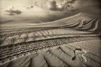 Dubai /  [desert tracks 5.jpg nggid03492 ngg0dyn 200x0 00f0w010c010r110f110r010t010]