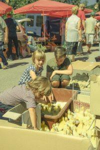 Family & Food (Bulgaria) /  [5.jpg nggid041705 ngg0dyn 200x0 00f0w010c010r110f110r010t010]