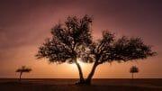 Oman /  [three trees oman.jpg nggid03744 ngg0dyn 180x0 00f0w010c010r110f110r010t010]