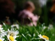 Portraits – Children /  [among the daisies too.jpg nggid03320 ngg0dyn 180x0 00f0w010c010r110f110r010t010]