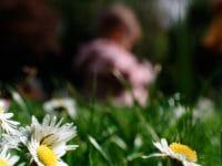 Portraits – Children /  [among the daisies too.jpg nggid03320 ngg0dyn 200x0 00f0w010c010r110f110r010t010]