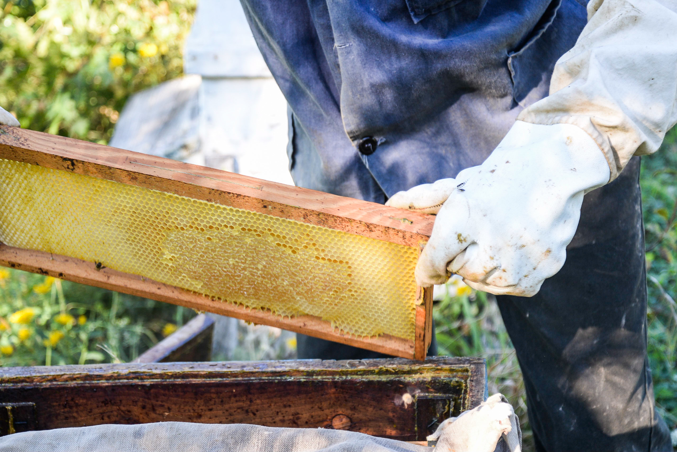 Village Honey /  [Village Honey 21]