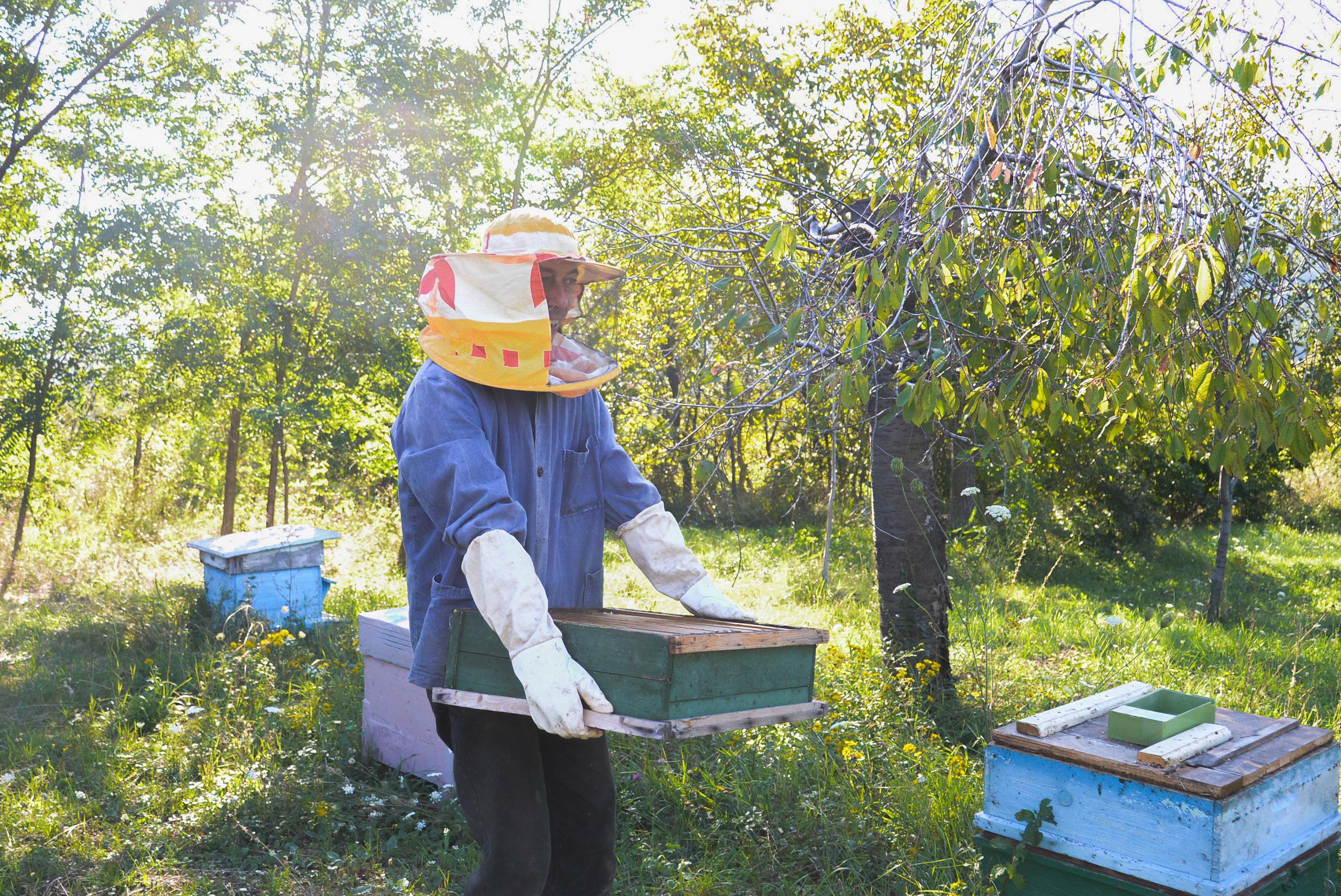 Village Honey /  [Village Honey 22]