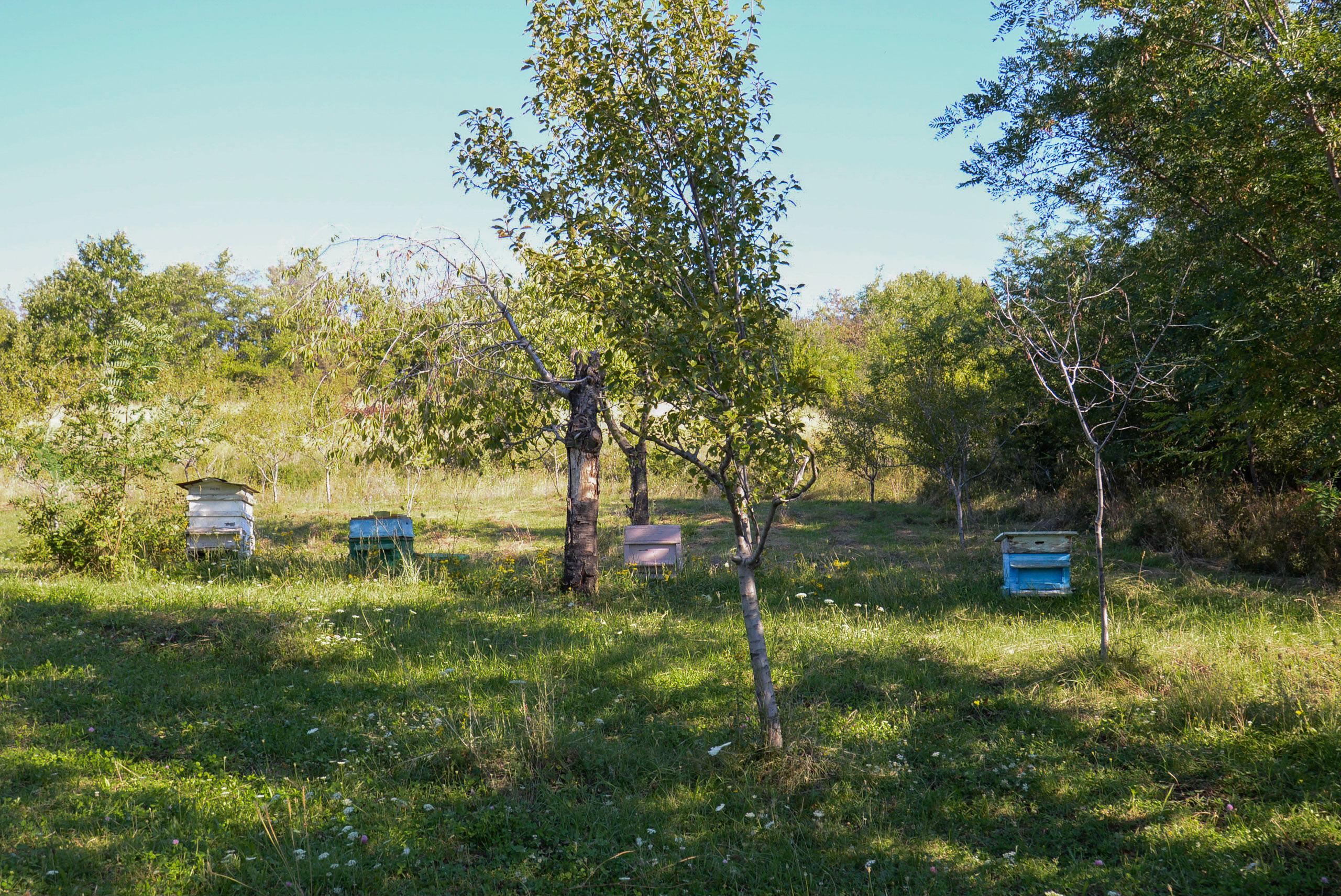 Village Honey /  [Village Honey 23]