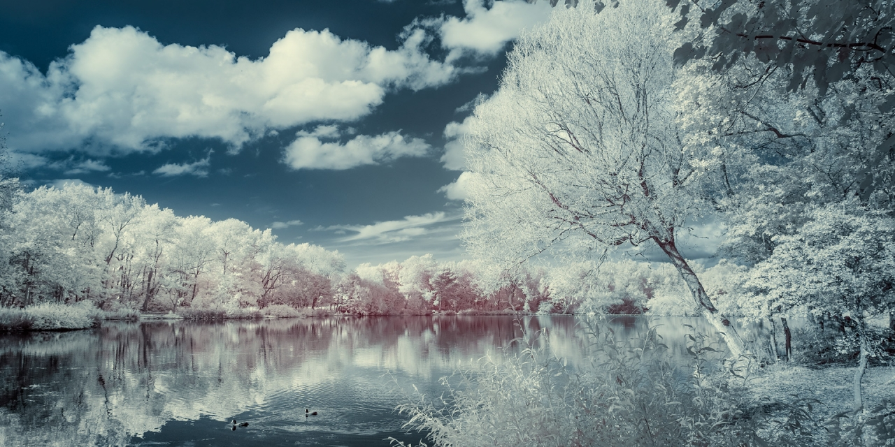 Stanley Park (infrared) / Show the Original, Infrared, Fujinon XF 16-55mm f/2.8, Fujifilm X-E2 [stanely park infrared f 1280x640]