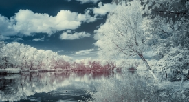 Stanley Park #2 (infrared) / Show the Original, Infrared, Fujinon XF 16-55mm f/2.8, Fujifilm X-E2 [stanely park infrared f 275x148]