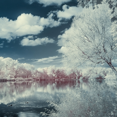 Photoblog Thumbnails /  [stanely park infrared f 400x400]