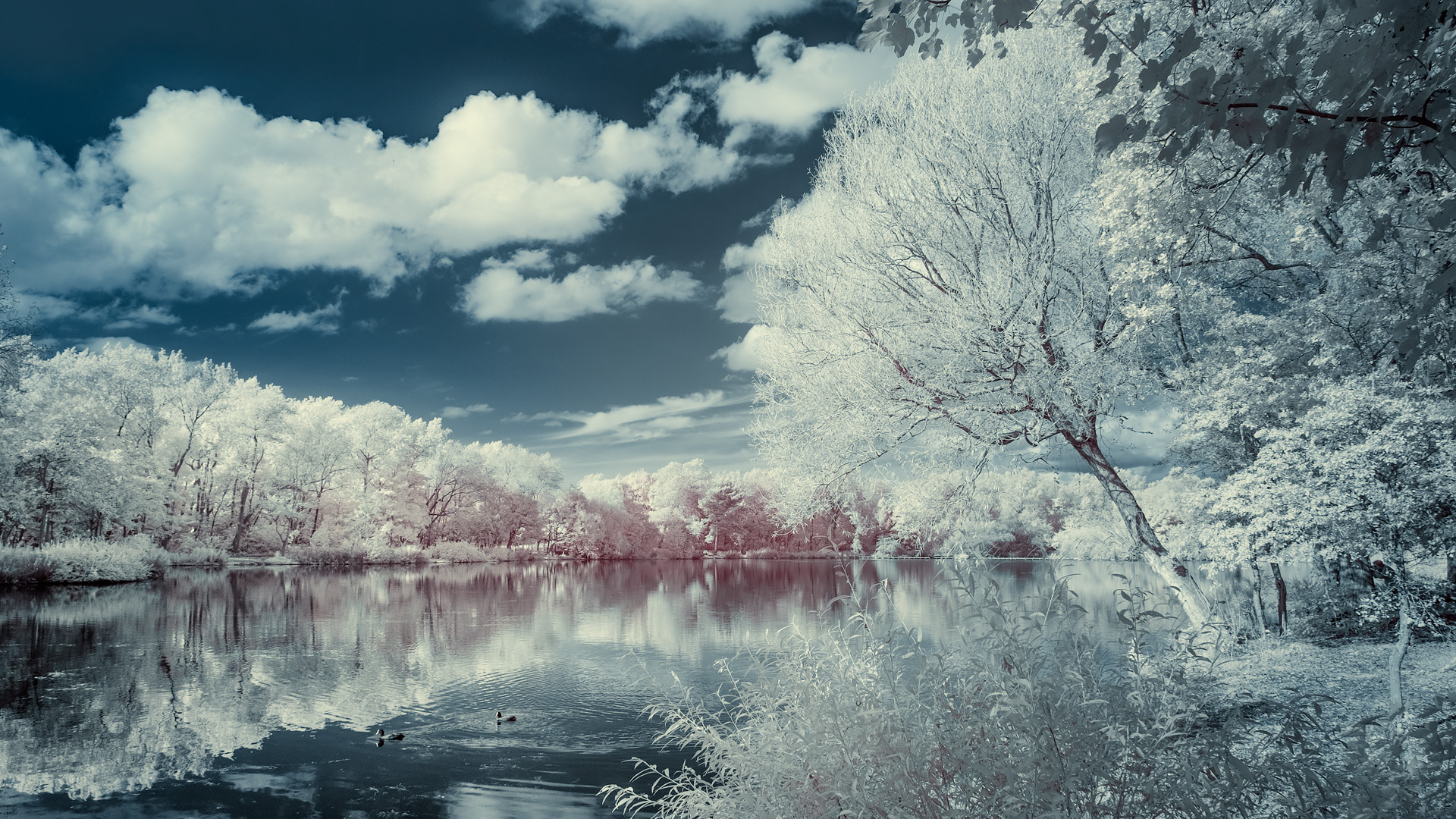 Stanley Park (infrared) / Show the Original, Infrared, Fujinon XF 16-55mm f/2.8, Fujifilm X-E2 [stanely park infrared f]