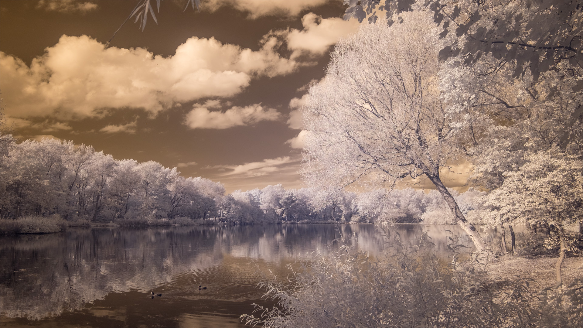 Stanley Park (infrared) / Show the Original, Infrared, Fujinon XF 16-55mm f/2.8, Fujifilm X-E2 [stanely park infrared o]