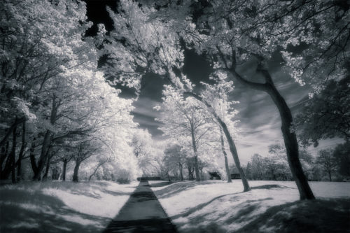 Stanley Park, May 2019 (IR) #2 / Stanley Park, Show the Original, Landscape Photography, Infrared, Fujinon XF 14mm f/2.8, Fujifilm X-E2, Blackpool [stanley park may 2019 2 f 500x333]